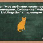 Текст «Мое любимое животное» на немецком. Сочинение «Mein Lieblingstier» с переводом